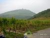 herbst2007-elsass-010.jpg