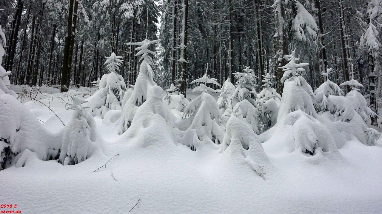 Schneeschuhwanderung Mommelstein_021