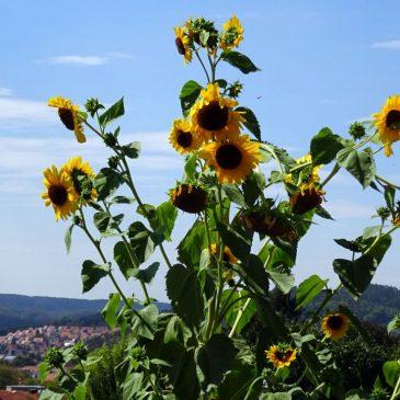 Seit Mai ein neues Hobby – Gartenarbeit